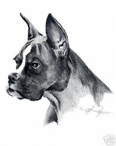 Boxer Dog Pencil Drawing 8 X 10 Art Print By Artist Djr Ebay