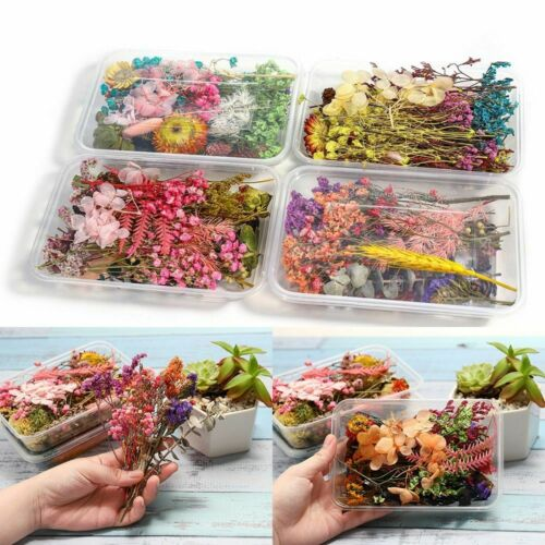 1 Box Random Real Dried Flower Resin Mold Fillings Jewelry Making Craft Supplies
