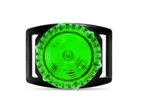 ADVENTURE DOG COLLAR LIGHT GREEN pig huntingrunning dogshunting dogsdog light