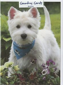 PACK OF 2 WESTIE DOG PUPPY BLANK CARD NO MESSAGE ONLY £1.25