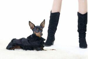 Manteau pour chien Manteau noir à ornements Manteau pour chien Manteau pour chien
