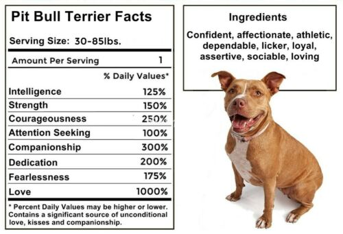 PIT BULL Facts Magnet