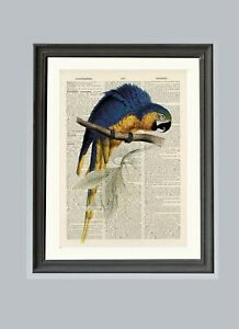 Old-Antique-Book-page-Art-Print-Vintage-Parrot-Dictionary-Page-Wall-Art