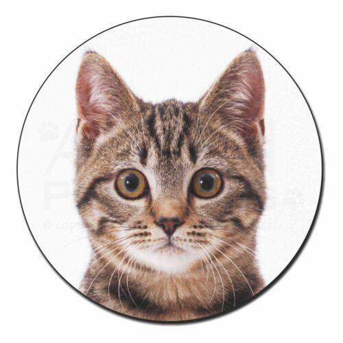 Brown Tabby Cats Face Fridge Magnet Stocking Filler Christmas Gift AC-201FM