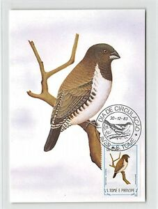 Brillant S. Tome Mk 1983 Oiseaux Spermète Nonnette Birds Carte Maximum Card Mc Cm M282-n Birds Carte Maximum Card Mc Cm M282fr-fr Afficher Le Titre D'origine