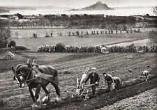 1934 Vintage 11x14 ENGLAND ~ Cornwall Farm Horse Agriculture Landscape Photo Art