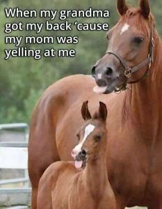 """Funny horse  refrigerater magnet  3 1//2X 3 1//2 /"""""""