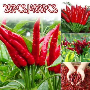 Am-200-400Pcs-Spicy-Red-Chili-Hot-Pepper-Seed-Vegetable-Garden-Courtyard-Plant