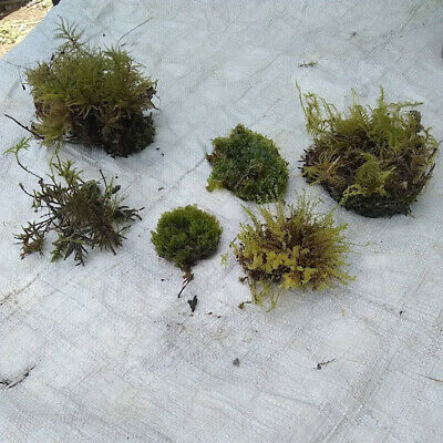 6 Different Named Greenhouse Grown Terrarium Mosses Lot A Ebay