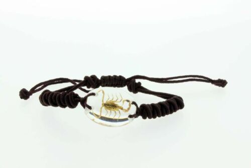 Real Insect Small Oval Bracelet. Various Models available Clear or Glow