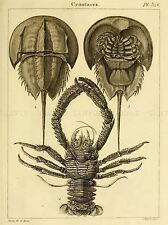 SCIENTIFIC ILLUSTRATION CRUSTACEANS HORSEHOE CRAB ART POSTER PRINT LV3852