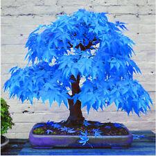 20pcs Rare Blue Maple Seeds Stunning Bonsai Tree Plants Garden Home Decor Hot
