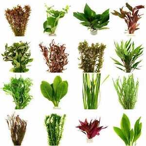 aquarien pflanzen