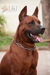 Perro-Gargantilla-Collar-Cadena-choque-fuerte-entrenamiento-de-Metal-Plateado-Todas-Las-Tallas