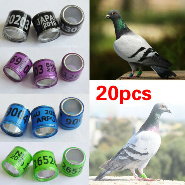 Ic/id Card 2019 Pigeon Leg Rings Identify Dove Bands 8mm Plastic With Al Gb Rings Pigeon Training Supplies Aluminium Rings For Pigeons