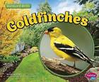 Goldfinches by Lisa J Amstutz (Paperback / softback, 2015)