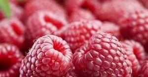 20-50-100-250-1000-RASPBERRY-SEEDS-Wild-Sweet-Red-Fruit-Bush-Plant-Veggie-AUST