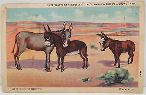 USA-Postcard-Postcard-Ak-Donkey-Two-S-Company-Three-S-a-Crowd-A2333