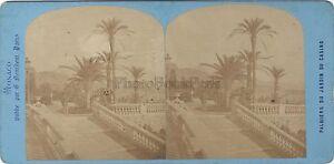Monaco Monte-Carlo Palma Del Giardino Vintage Stereo Albumina Ca 1875