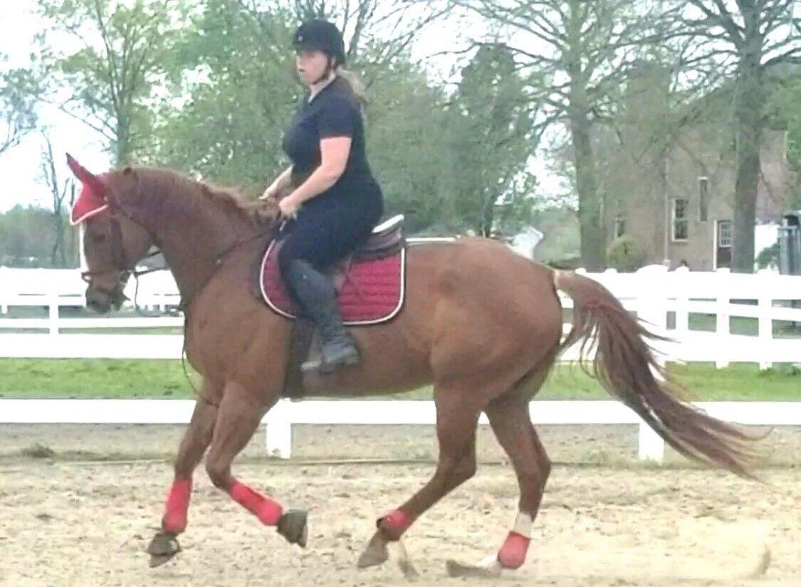 New Horse English Saddle Pad Set Matching Fly Bonnet Veil Net Ear Net Veil Polyester 06eeb7