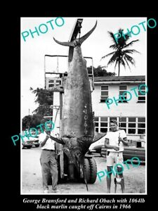 OLD-8x6-GAME-FISHING-PHOTO-OF-1000lb-BLACK-MARLIN-CAUGHT-OFF-CAIRNS-c1966