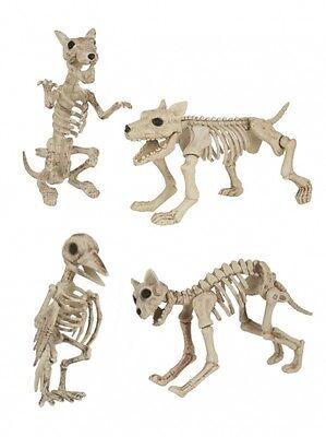 HALLOWEEN DECORATIONS 3D SKELETON MODEL ANIMALS CAT DOG RAT BIRD