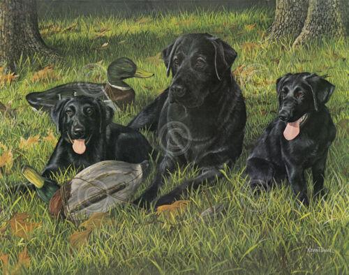 DOG ART PRINT Getting Familiar Kevin Daniel Black Lab Labrador Hunt Poster 11x14