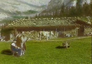 low chalet man milking cow kandersteg switzerland magic lantern