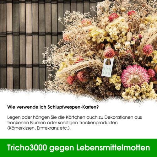 Schlupfwespen gegen Lebensmittelmotten 6000 Schlupfwespen auf 2 Karten