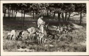 Catskill-NY-Game-Farm-Feeding-Deer-Real-Photo-Postcard
