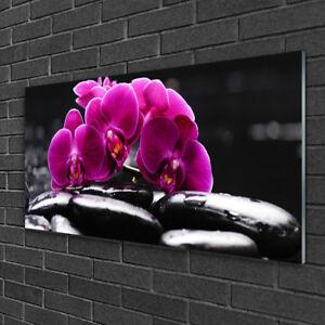 Glasbilder 100x50 Wandbild Druck auf Glas Blume Steine Pflanzen