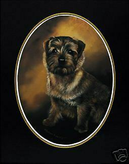 """Norfolk Terrier Classic Oval Print 16/"""" X 12/"""""""