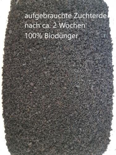 Angelwurm 1Liter Wurmfutter Dendrobena  6 Liter Zuchterde // Wurmerde Wurm