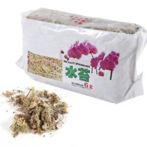 12l sphagnum moos feuchtigkeitsspendender d nger f r phalaenopsis orchidee rh ebay. Black Bedroom Furniture Sets. Home Design Ideas
