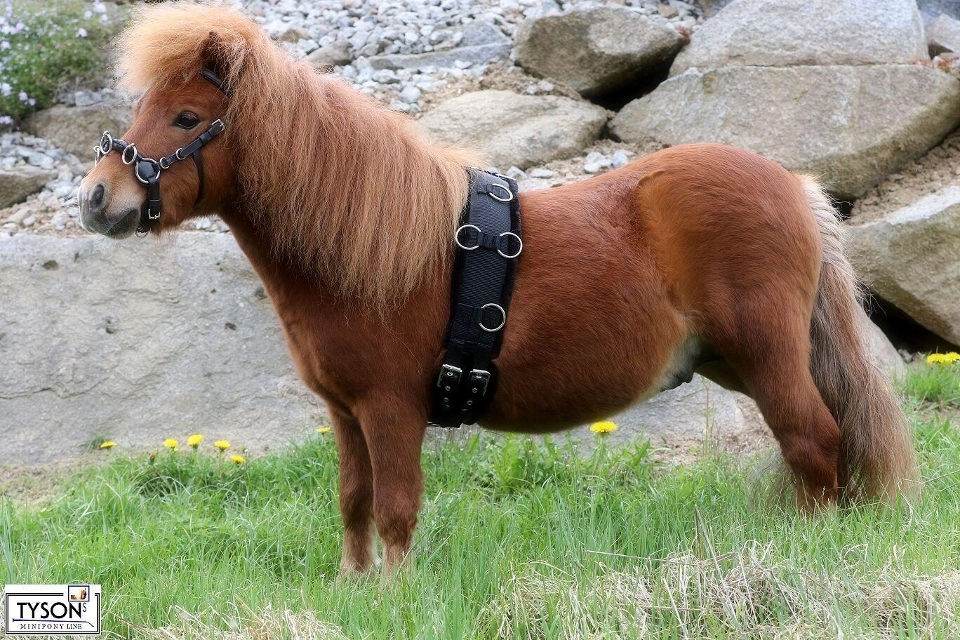 Longiergurt Nylon Plüsch MS  S Pony Minishetty - Shetty Tysons Bauchgurt extra