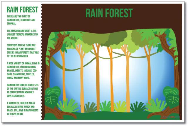 ms271 Rainforest NEW World Habitat Ecosystems Poster