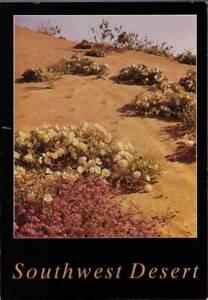 vz7-Postcard-Southwest-Desert