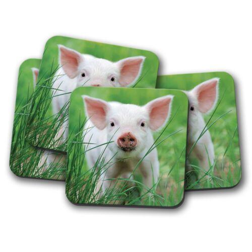4 Set-Mignon Rose Porcelet Coaster-Cochon PORC FARM ANIMAL Kids Cool Cadeau #13031