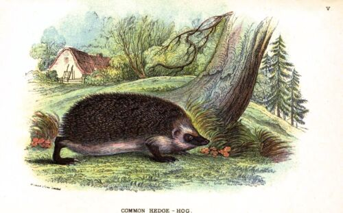 Postcard Cute Hedgehog Enjoying the Countryside Vintage repro