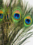 20Pcs-Natural-Peacock-Feathers-douze-pouces-de-long-artisanat-et-bijoux-Supply miniature 1