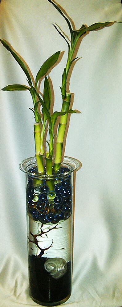 TOP GIFT  Living Vase  - AMAZING Desktop Ecosystem Aquarium (BREED-ABLE) + Bonus