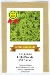 Pflücksalat SCHÖN und SCHNELL! Lollo Bionda Salate 50+ Samen