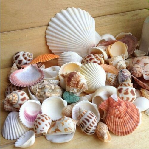 100g Muschel *ZJP Mode Aquarium Strand nautische DIY Muscheln gemischt Groß ca