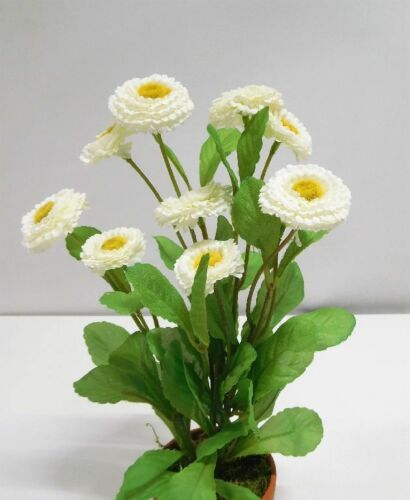Bellis Mille Belle dekopflanze art plante 26 cm blanc n-88207-0 ungetopft f16