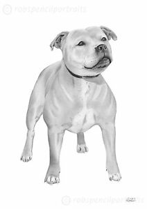 STAFF Staffy Staffie Bull Terrier Drawing Art Print Present Staffy - Bull terrier art