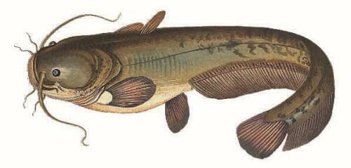7 Stück 230HC Maruto Oehr Catfish gs Gr.4