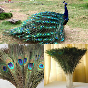 Natural-Peacock-Tail-Eyes-Feathers-8-12-039-039-Long-BOUQUET-10PCS-Lot