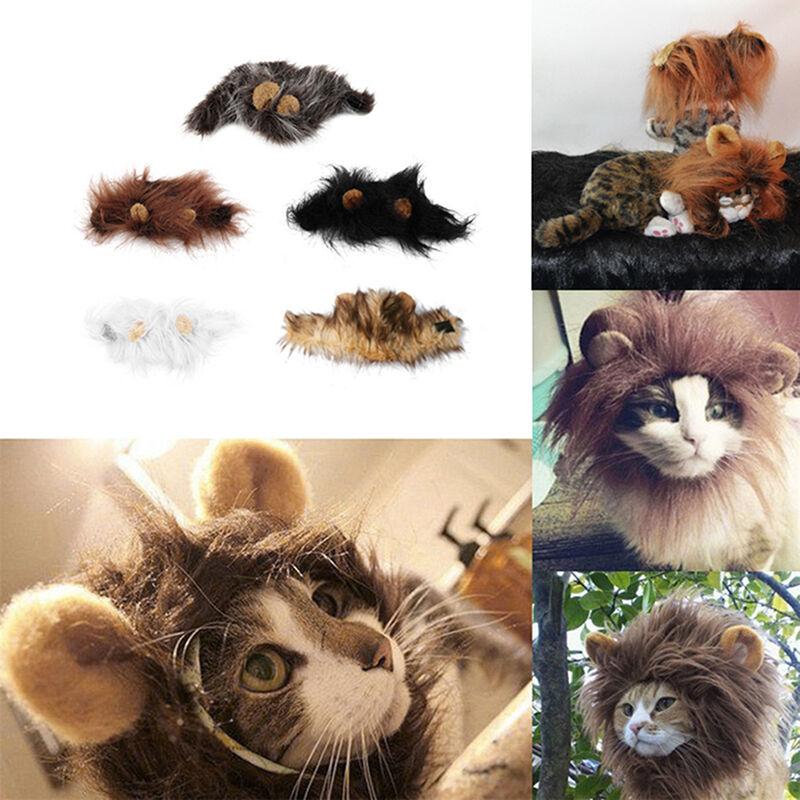 déguisement halloween chat lion