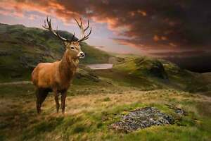 RED-STAG-CANVAS-WALL-ART-HOME-DECOR-PICTURE-PRINT-FRAMED-20X30-INCHES