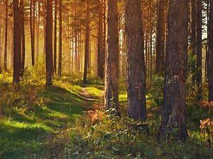PHOTO-PAINTING-DIGITAL-SPRING-FOREST-SCENE-18X24-039-039-POSTER-ART-PRINT-LF037